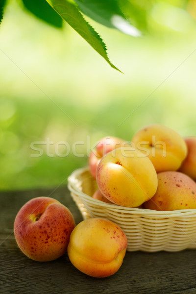 Ripe Tasty Apricots in the Basket on the Old Wooden Table Stock photo © maxpro