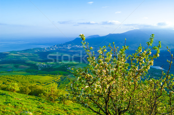 Beautiful Mountain Valley with Sunlight Stock photo © maxpro