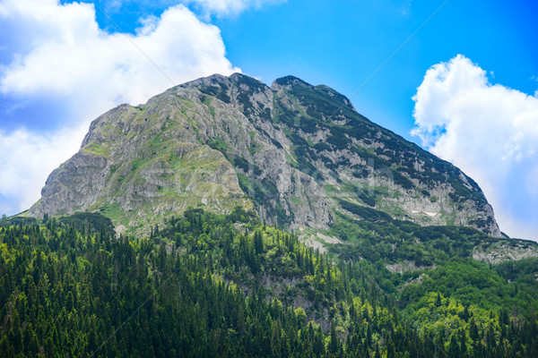 Beautiful Medjed (Bear) Peak with Green Forest. Mountain in the National Park Durmitor, Dinaric Alps Stock photo © maxpro