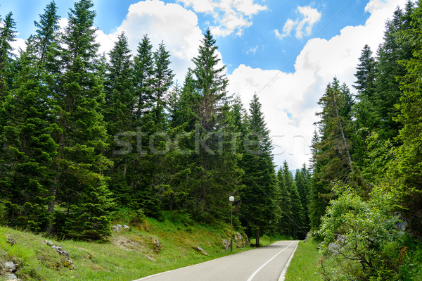 Free Road among Beautiful Forest in the National Park Durmitor, Montenegro Stock photo © maxpro
