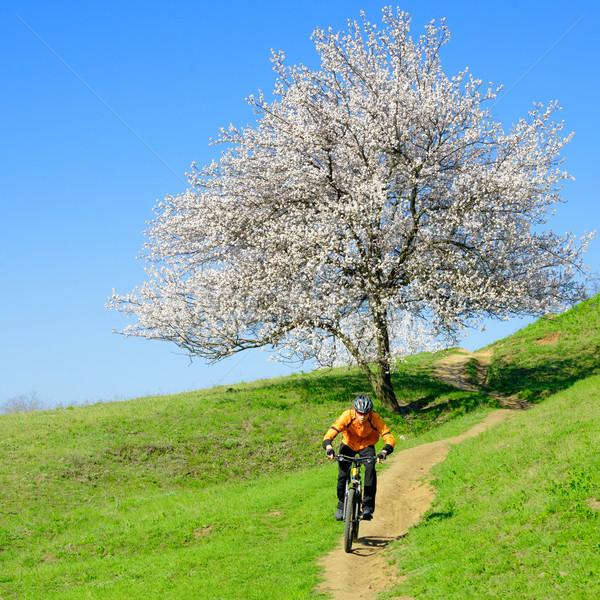 Bisikletçi binicilik bisiklet yeşil tepe güzel Stok fotoğraf © maxpro