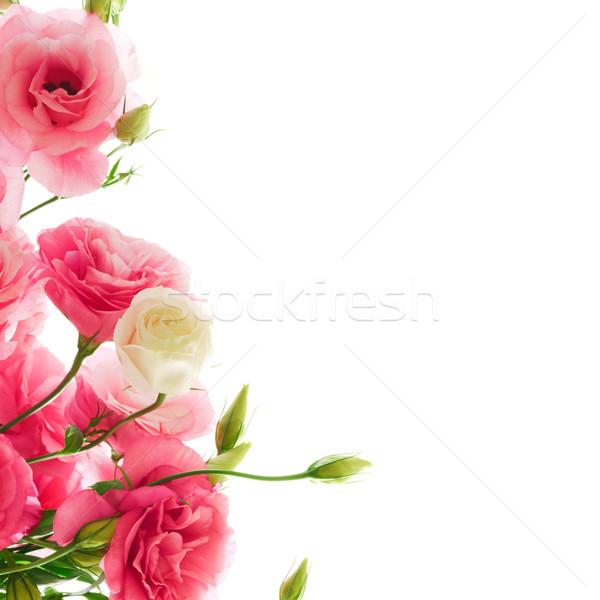 Beautiful Eustoma Flowers on the White Background Stock photo © maxpro