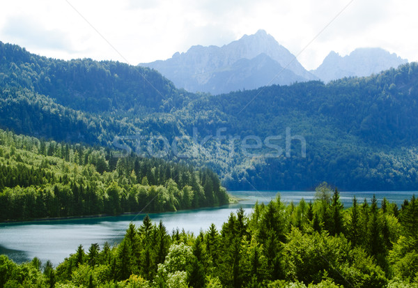 Alpsee Lake in the Forest and Alps Mountains. Bavaria, Germany Stock photo © maxpro
