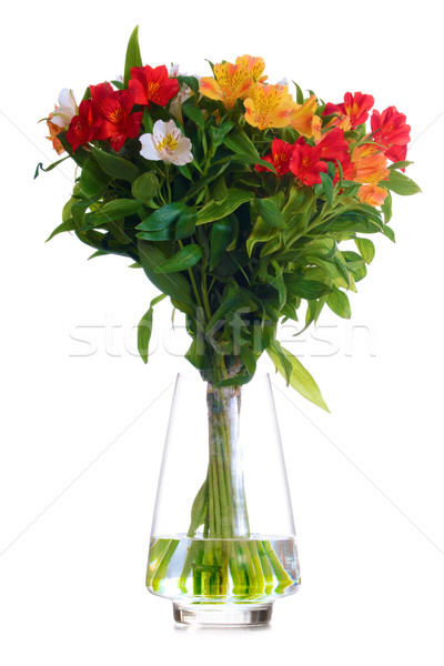 Beautiful Coloured Flowers in the Glass Vase Isolated on White Stock photo © maxpro