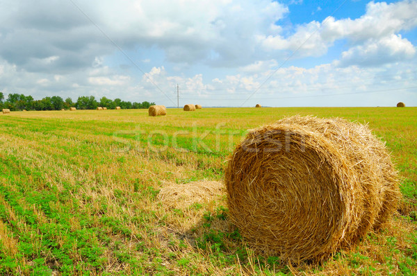 Stock photo: Harvested Field with Round Straw Bales
