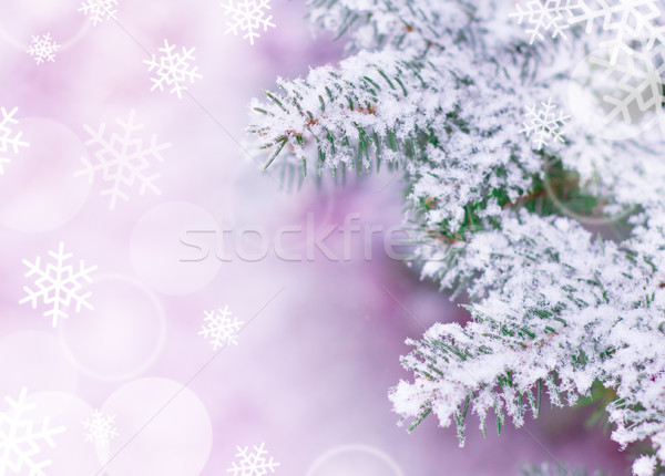 Stock photo: Christmas Background with Fir-tree and Real Snow
