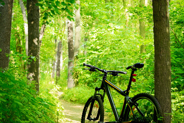 Stock photo: Mountain Bike on the Trail in the Forest