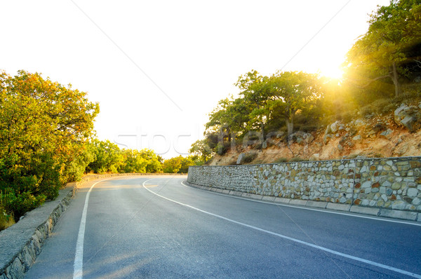 Empty Road in Beautiful Green Summer Forest Stock photo © maxpro