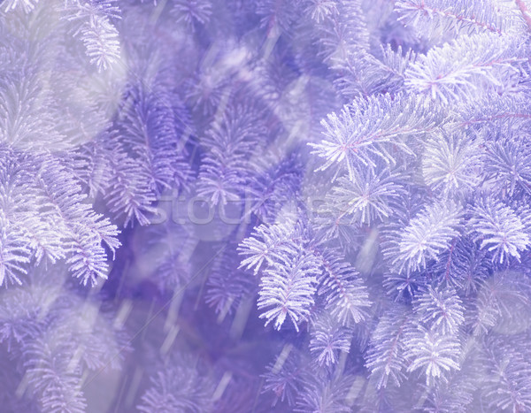 Stock photo: Winter and Christmas Background. Close-up Photo of Fir-tree Branch Covered with Frost.