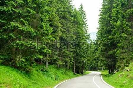 Free Road among Beautiful Forest in the National Park Durmitor,  Stock photo © maxpro