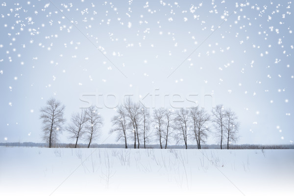 Winter Landscape with Lonely Trees and Snow Stock photo © maxpro