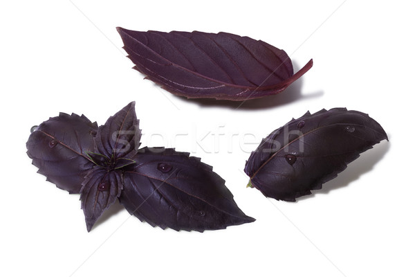 Set of purple Basil leaves Stock photo © maxsol7