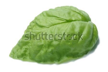 Single basil leaf Stock photo © maxsol7