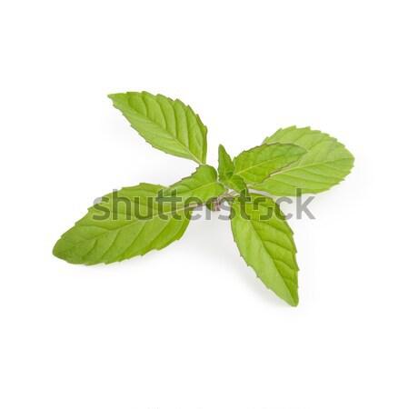 De folhas fresco hortelã grande verde Foto stock © maxsol7