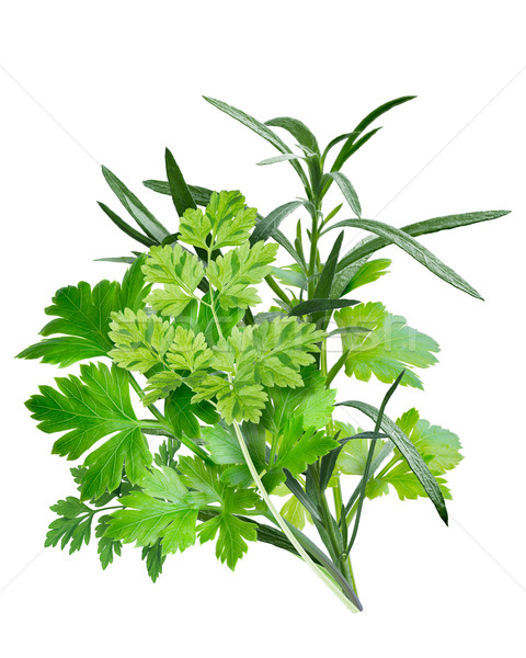 Fines herbes (combination of herbs) Stock photo © maxsol7
