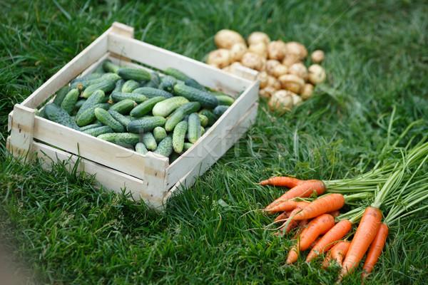 Vehetable harvest Stock photo © maxsol7