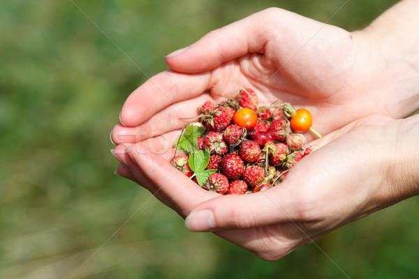 Handful of wildberries Stock photo © maxsol7