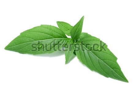 Tempero globo manjericão folhas picante separado Foto stock © maxsol7