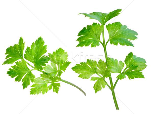 петрушка бесконечный лист зеленый набор Сток-фото © maxsol7