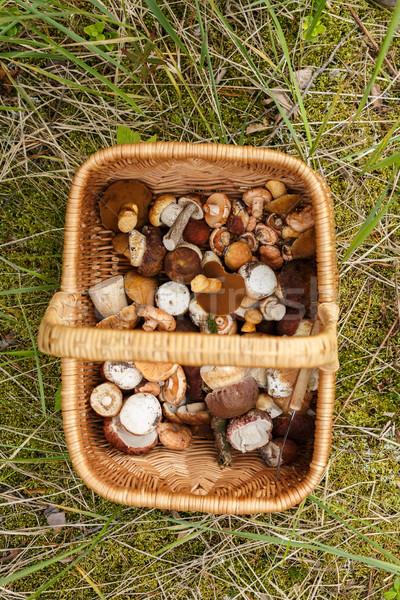 Kosár gombák tele vad erdő Stock fotó © maxsol7