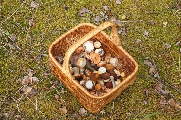 Basket with mushrooms Stock photo © maxsol7