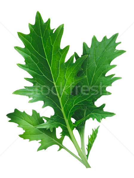 Mizuna leafy salad (Japanese mustard) Stock photo © maxsol7