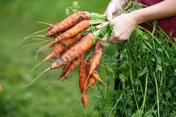 Carrots harvest Stock photo © maxsol7