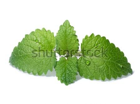 Limão bálsamo folhas poucos tanto Foto stock © maxsol7