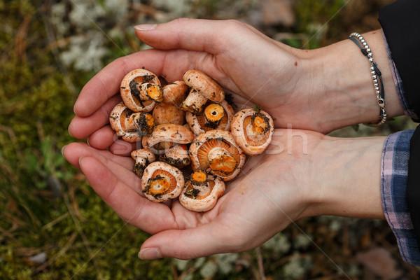 Handful of mushrooms Stock photo © maxsol7