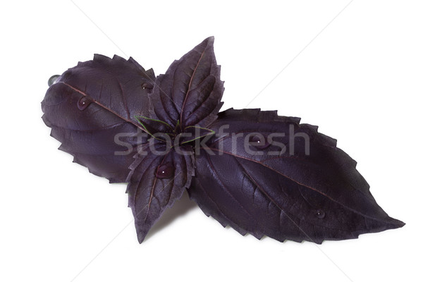 Purple Basil leaмуы with few droplets Stock photo © maxsol7