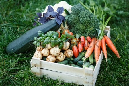 Stock photo: Harvest collage