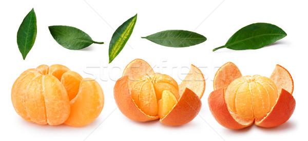 Ingesteld bladeren vruchten witte geïsoleerd Stockfoto © maxsol7