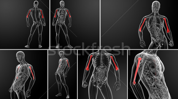 3D prestados osso ver de volta médico saúde Foto stock © maya2008
