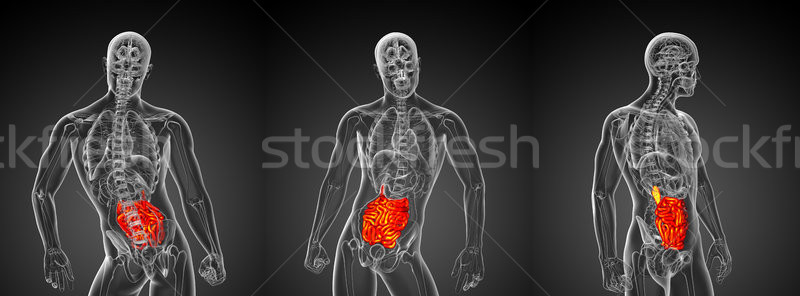 3d rendering illustration of the male small intestine Stock photo © maya2008