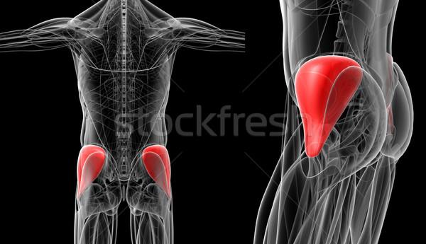 Médico ilustração homem ciência músculo pele Foto stock © maya2008