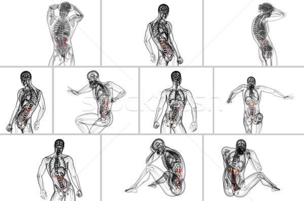 Stock fotó: 3D · renderelt · kép · orvosi · illusztráció