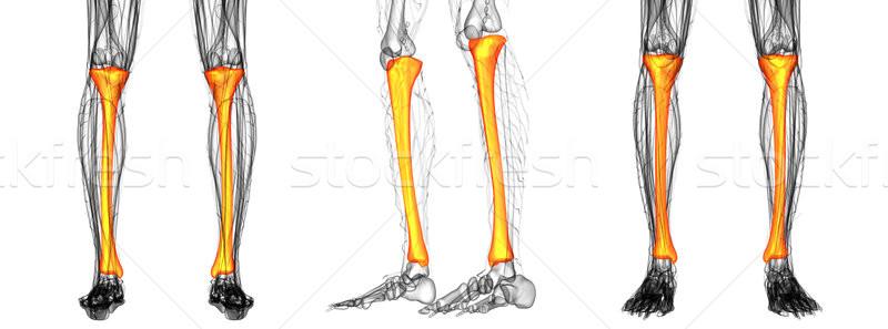 3D médico ilustração saúde Foto stock © maya2008