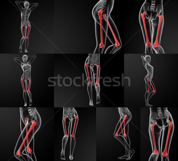 3D illustrazione ossa donna uomo Foto d'archivio © maya2008