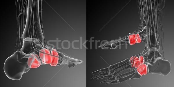 3D medische illustratie bot Stockfoto © maya2008