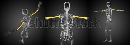 3D renderelt kép orvosi 3d illusztráció csont Stock fotó © maya2008