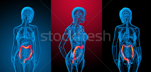 Stock photo: 3d rendering medical illustration of the human larg intestine