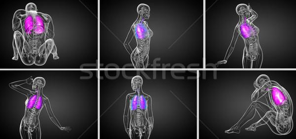 3D медицинской иллюстрация человека дыхательный Сток-фото © maya2008