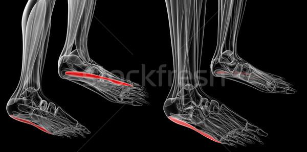 Médico ilustração corpo saúde pé branco Foto stock © maya2008