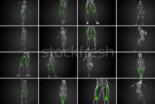 3d rendering medical illustration of the femur bone  Stock photo © maya2008