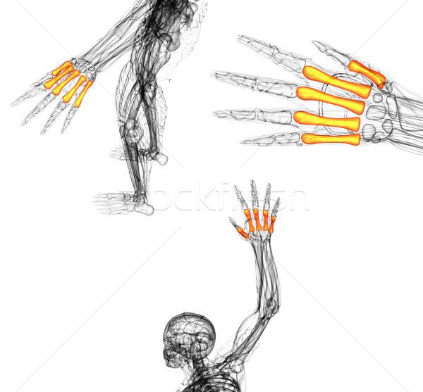 3d render médico ilustração osso mão Foto stock © maya2008