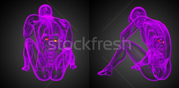 3D örnek insan Stok fotoğraf © maya2008