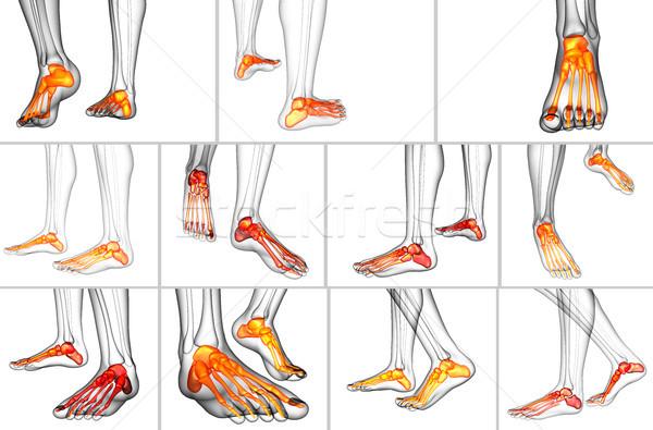 3d rendering medical illustration of the foot bone Stock photo © maya2008