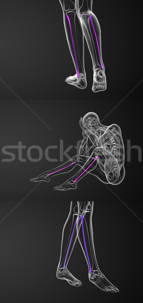 3d rendering medical illustration of the fibula bone  Stock photo © maya2008
