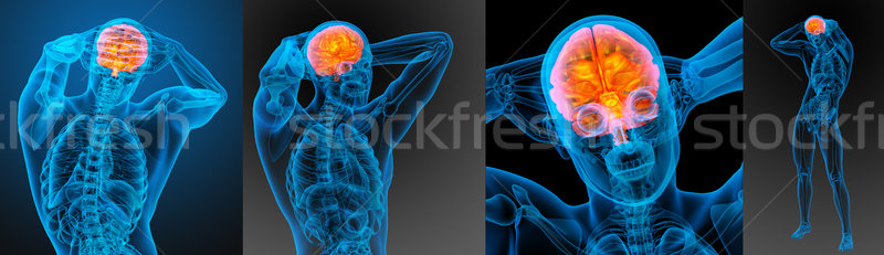 3d rendering medical illustration of the human brain Stock photo © maya2008