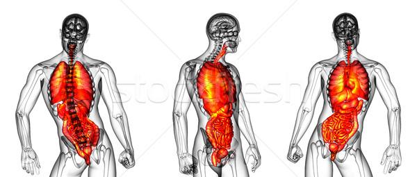 3D renderelt kép orvosi illusztráció emberi emésztőrendszer Stock fotó © maya2008